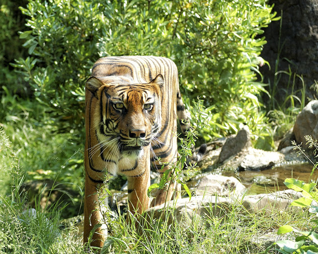 animal-cube-2