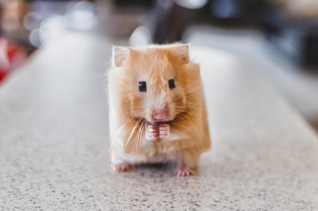 animal-cube-4